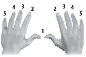 Dedos para tocar teclado